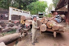 बरामद काठ बेपत्ता  : 'लुकाएको आशंका लागेका कर्मचारीको सरुवा'
